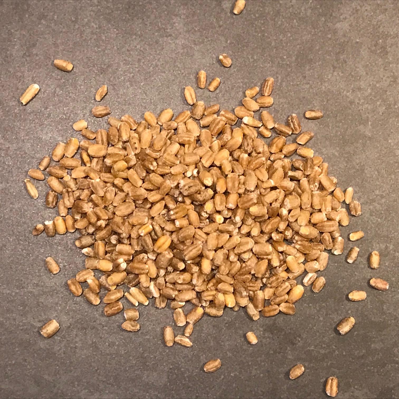Hela korn för groddning
