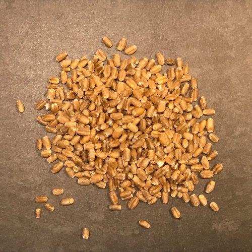 Vete för groddning, 1 kg, sort Dacke